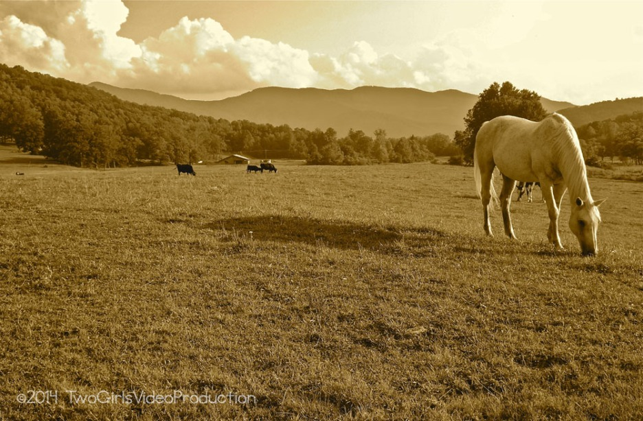Horse and cows in the meadow