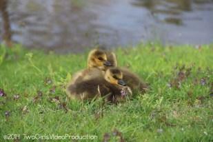 Babies in spring